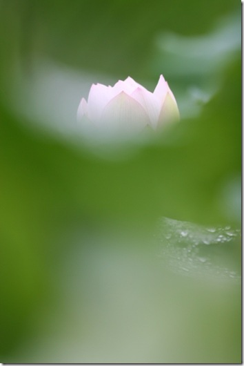 image1088
